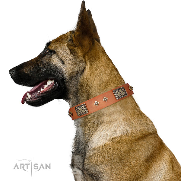 Daily walking dog collar of genuine leather with inimitable embellishments