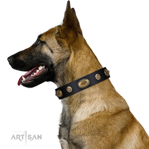 Comfy wearing dog collar of leather with designer studs