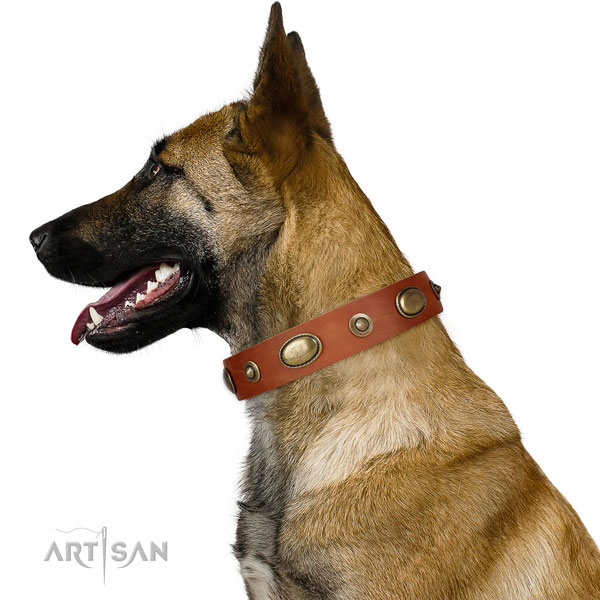 Daily use dog collar of natural leather with extraordinary adornments