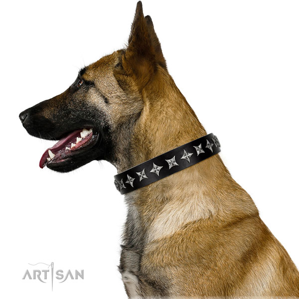 Daily use adorned dog collar of finest quality leather