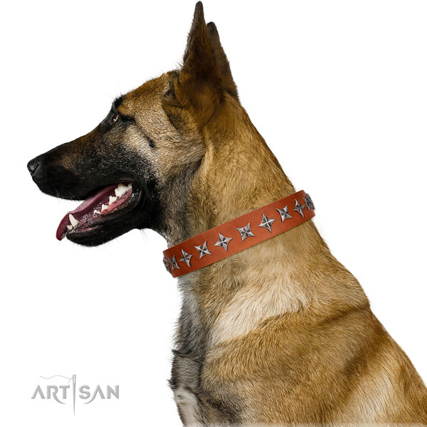 Walking adorned dog collar of fine quality natural leather