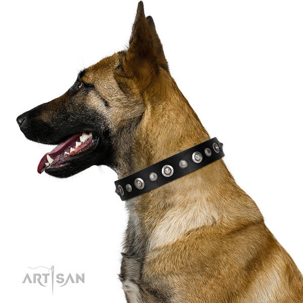 Durable full grain leather dog collar with significant adornments