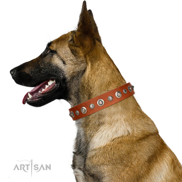 Fine quality full grain leather dog collar with designer embellishments
