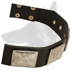 Luxurious Malinois Leather Dog Collar