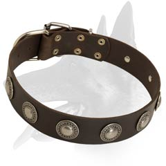 Comfy Malinois Leather Collar