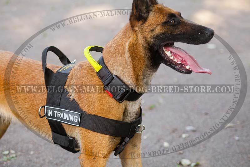 Dog behavior modification tools