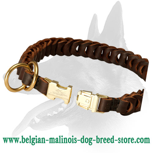 Leather choke collar for Belgian Malinois reliable gear