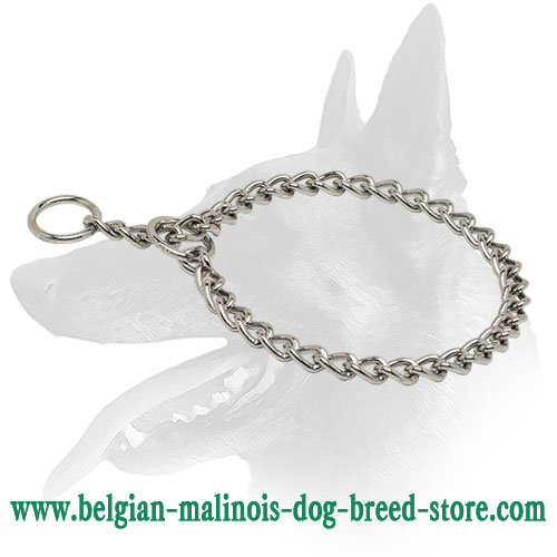 Effective Belgian Malinois chrome plated collar to correct behavior