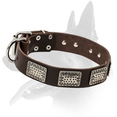 Leather collar with hammered plates for Belgian Malinois