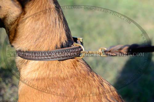 D-ring on Belgian Malinois leather collar