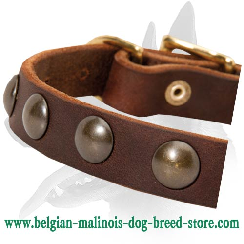 Belgian Malinois leather collar affordable price