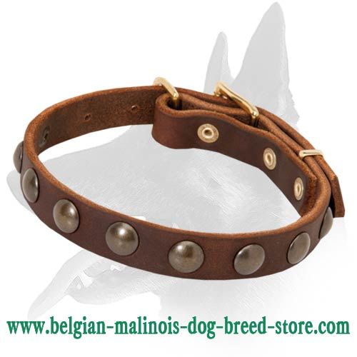 leather collar for Belgian Malinois lightweight