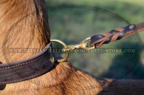 2 ply Belgian Malinois leather collar with D-ring