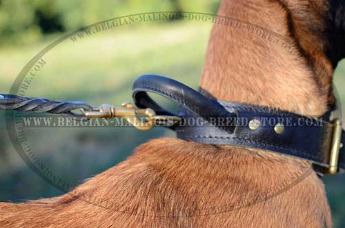 Walking Belgian Malinois leather collar with brass D-ring