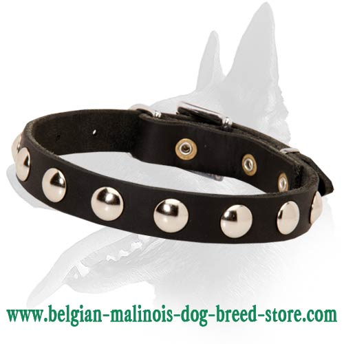 Leather Belgian Malinois collar with shining studs