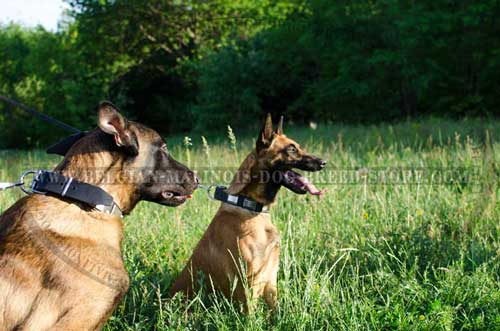 Malinois Leather Collars for Stylish Walking