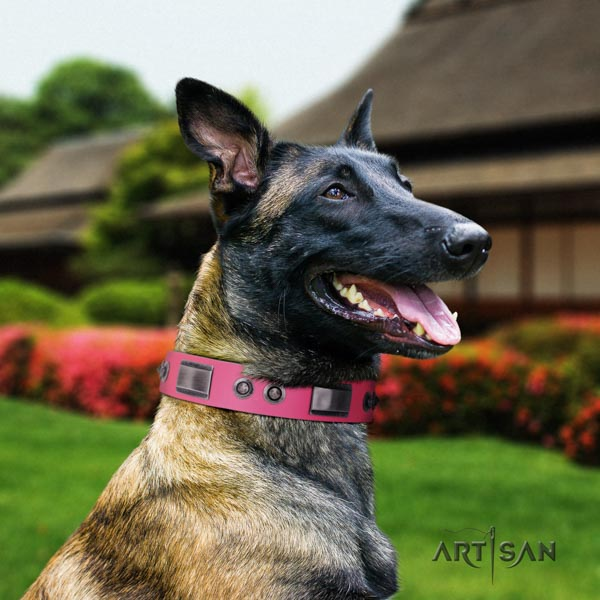 Belgian Malinois daily use full grain genuine leather collar for your handsome canine