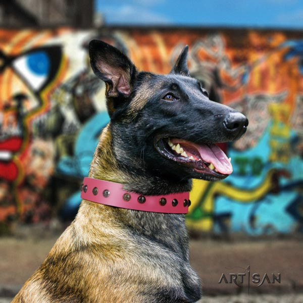 Belgian Malinois daily walking leather collar for your attractive four-legged friend