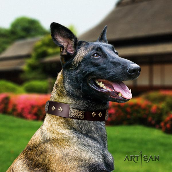 Belgian Malinois comfortable wearing full grain natural leather collar for your stylish four-legged friend