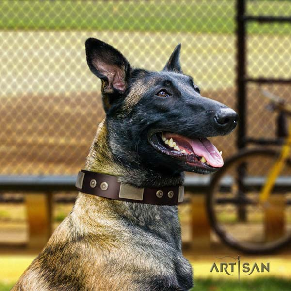Belgian Malinois basic training full grain leather collar for your impressive pet