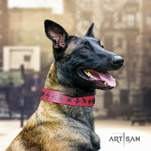 Belgian Malinois stylish walking full grain leather collar for your lovely dog