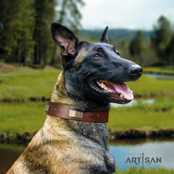 Belgian Malinois comfy wearing genuine leather collar for your attractive canine