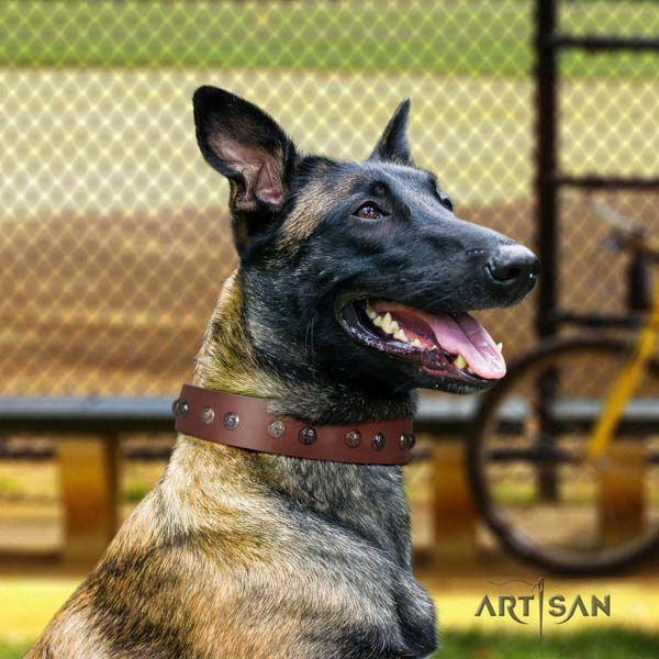 Belgian Malinois walking leather collar for your lovely doggie