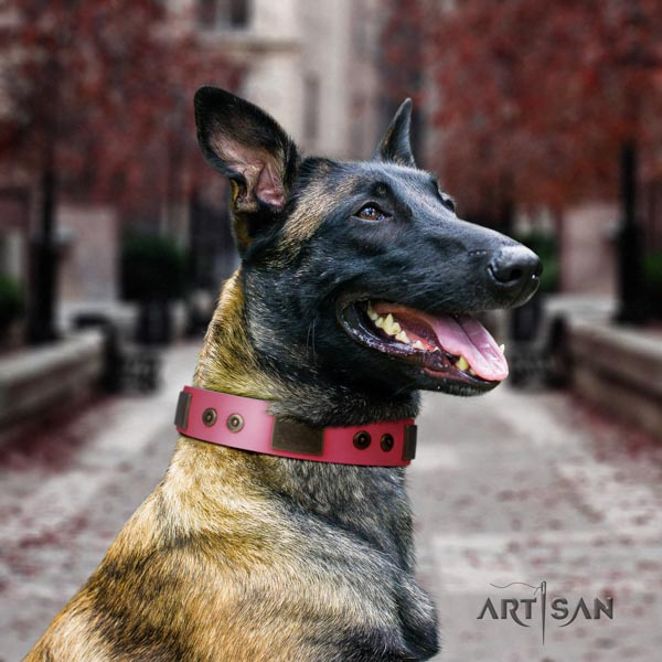 Belgian Malinois daily use leather collar for your lovely four-legged friend