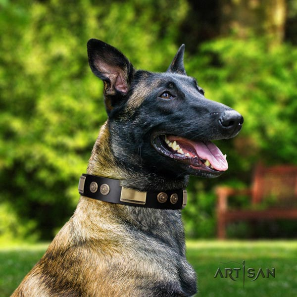 Belgian Malinois easy wearing leather collar for your handsome doggie