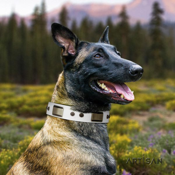 Belgian Malinois stylish walking full grain leather collar for your impressive pet