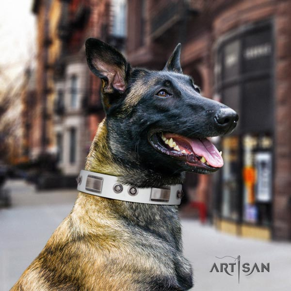 Belgian Malinois handy use genuine leather collar for your impressive dog