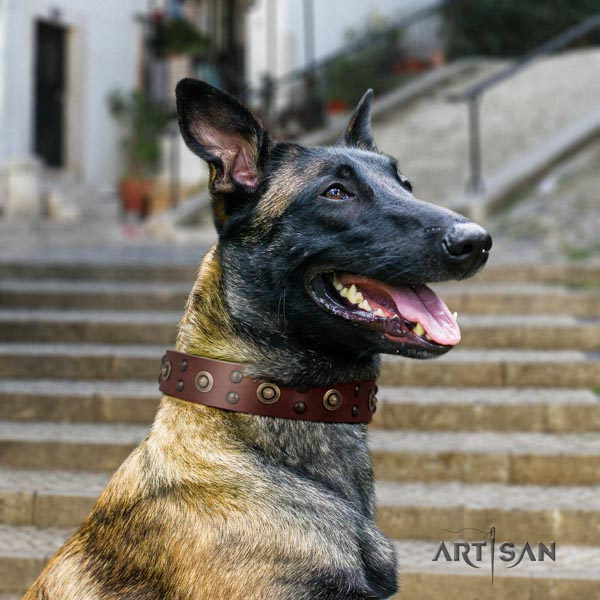 Belgian Malinois everyday walking full grain genuine leather collar for your attractive doggie