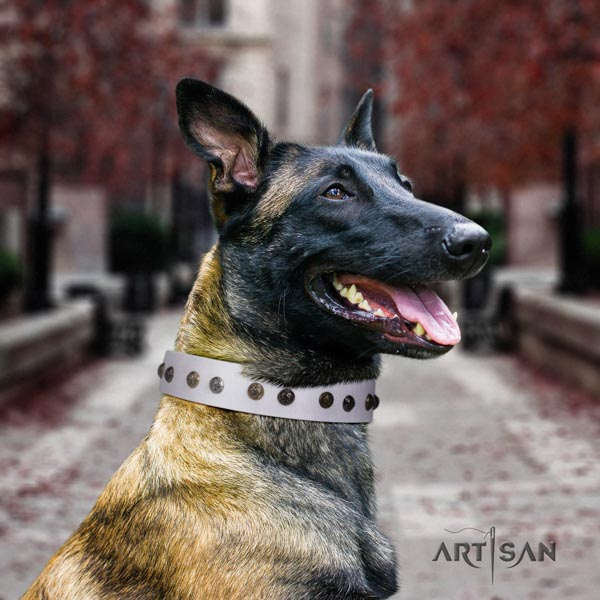 Belgian Malinois daily use genuine leather collar for your lovely four-legged friend