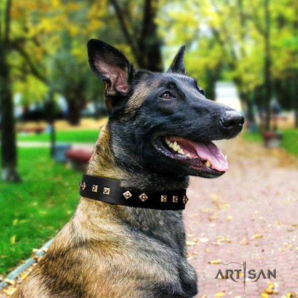 Belgian Malinois daily walking full grain leather collar for your lovely canine