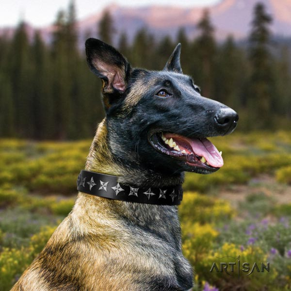Belgian Malinois comfortable wearing full grain natural leather collar for your beautiful doggie