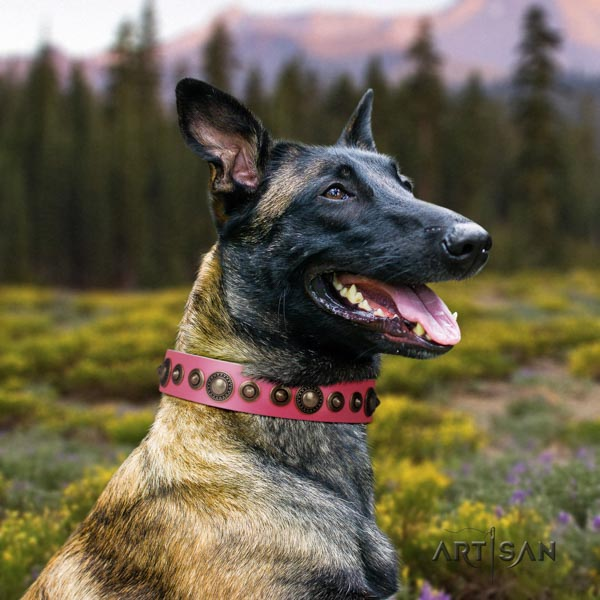 Belgian Malinois daily walking genuine leather collar for your beautiful four-legged friend