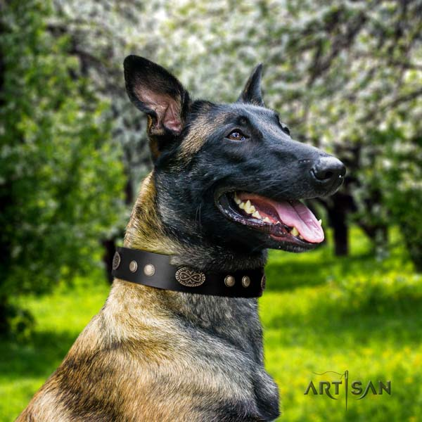 Belgian Malinois daily use full grain natural leather collar for your impressive doggie