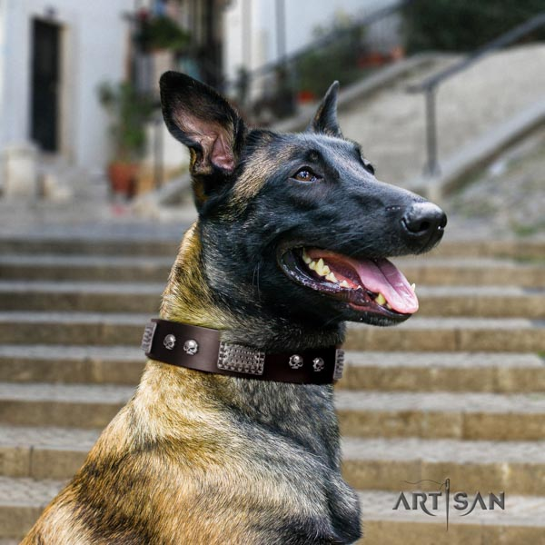 Belgian Malinois comfy wearing natural leather collar for your lovely four-legged friend