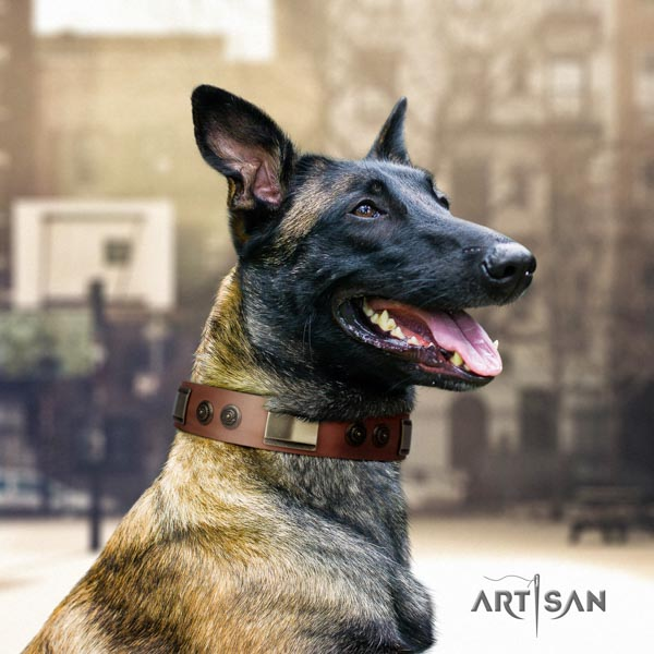 Belgian Malinois daily use full grain leather collar for your handsome dog