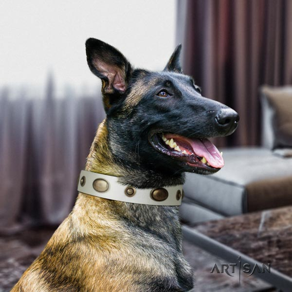 Belgian Malinois daily use genuine leather collar for your impressive four-legged friend