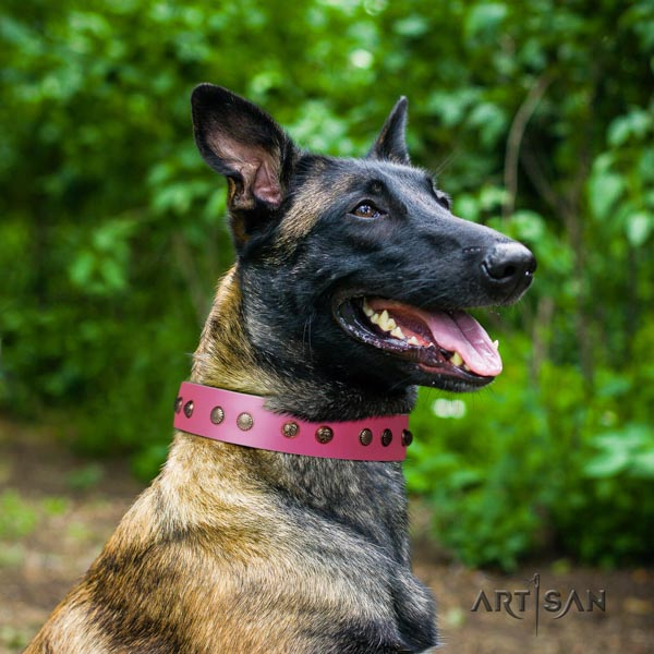 Belgian Malinois everyday walking full grain leather collar for your impressive doggie