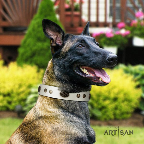 Belgian Malinois handy use leather collar for your beautiful four-legged friend