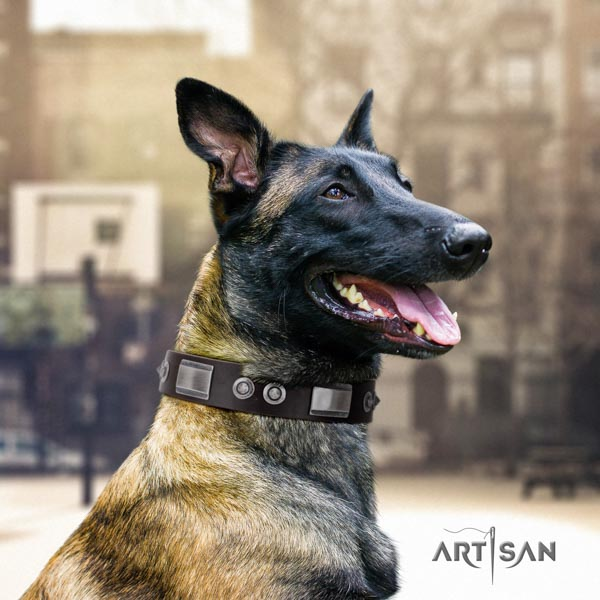 Belgian Malinois comfortable wearing genuine leather collar for your handsome pet