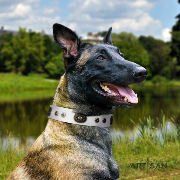 Belgian Malinois easy wearing leather collar for your lovely doggie