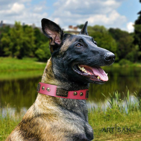 Belgian Malinois daily use genuine leather collar for your handsome dog
