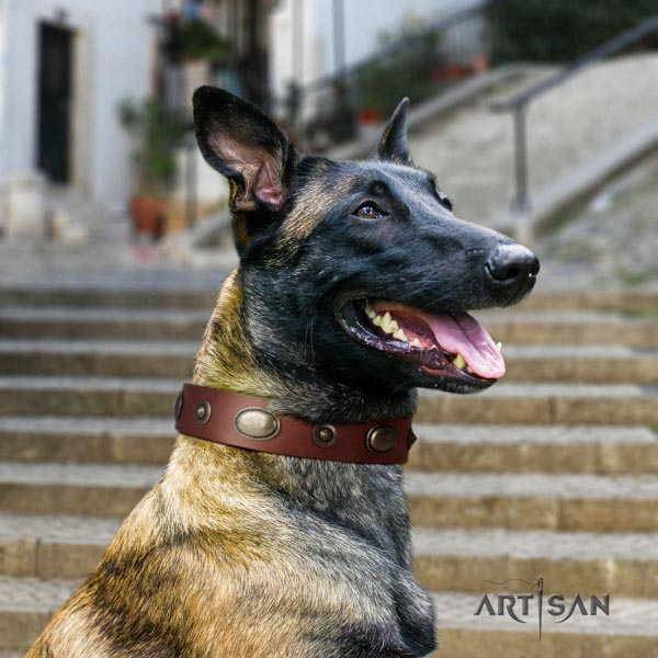 Belgian Malinois daily walking leather collar for your lovely doggie