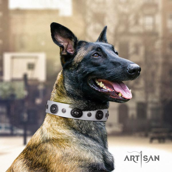 Belgian Malinois daily walking natural leather collar for your stylish dog