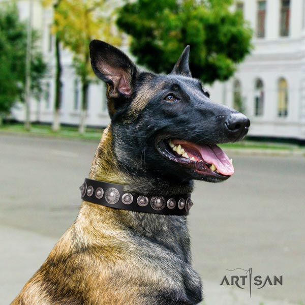 Belgian Malinois walking natural leather collar for your handsome pet
