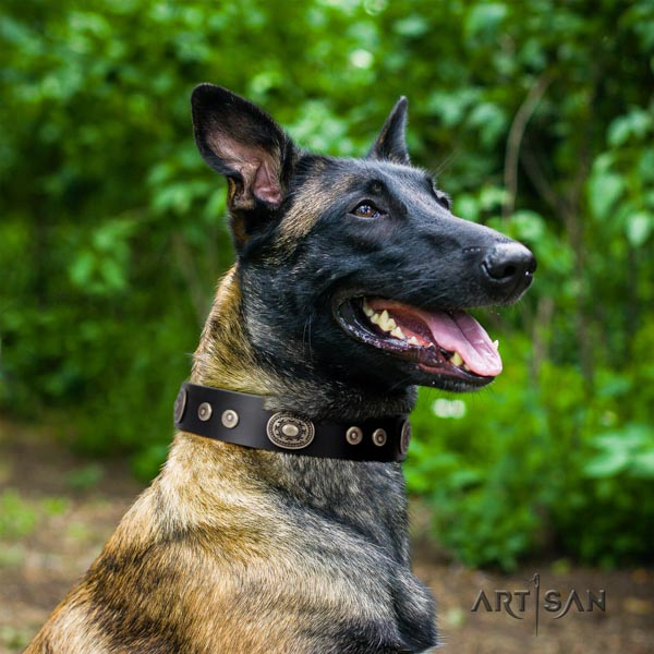 Belgian Malinois easy wearing full grain leather collar for your handsome dog