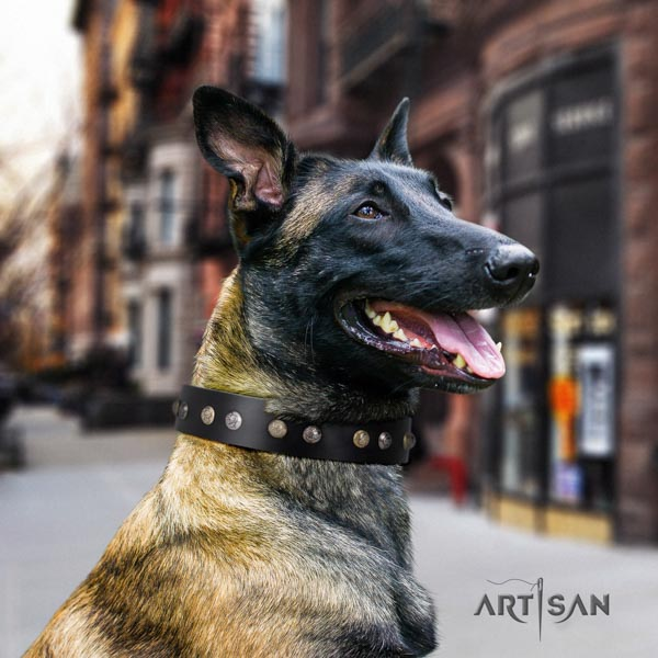 Belgian Malinois walking natural leather collar for your impressive four-legged friend
